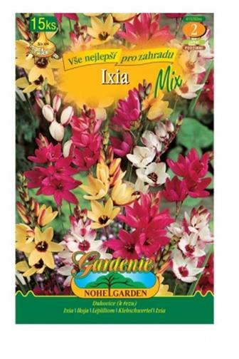 Ixia (duhovice) mix barev 15 ks